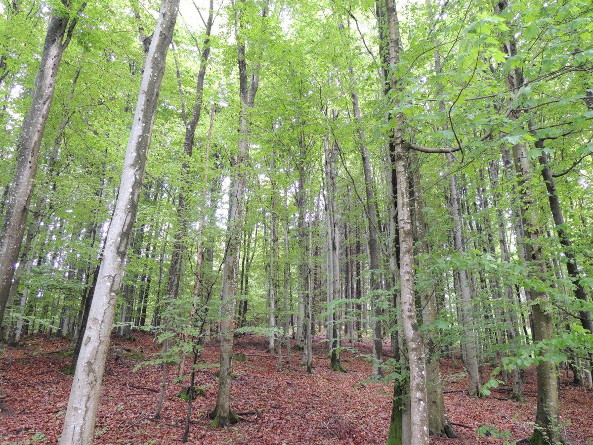 森林浴 Waldbaden